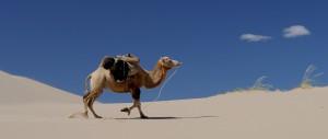 camel-692648_1280
